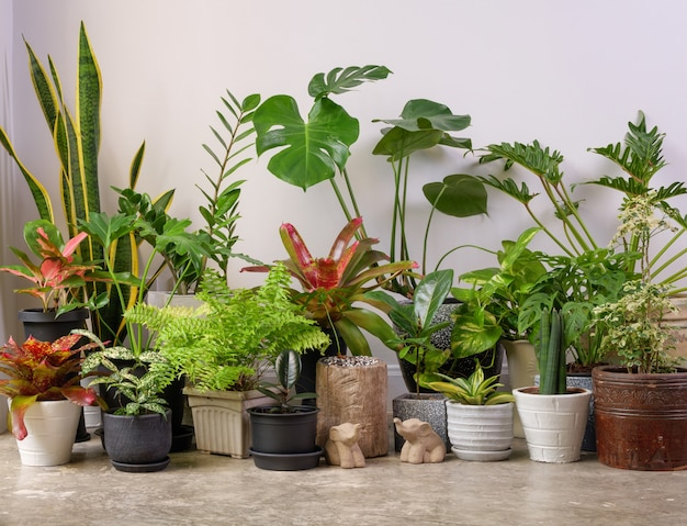 Diverse kamerplanten op cementvloer en olifantenstandbeeld in witte kamer lucht zuiveren met monsteraphilodendron selloum cactusaroid palmzamioculcas zamifoliaficus lyratagevlekte betelslang plant