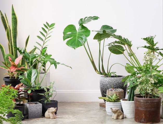 Diverse kamerplanten op cementvloer en olifantenstandbeeld in witte kamerlucht zuiveren met monsteraphilodendron selloum cactusaroid palmzamioculcas zamifoliaficus lyratagevlekte betelslang plant