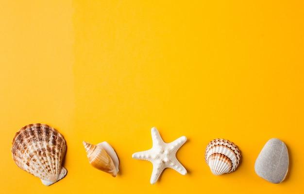 Diverse schelpen op geel