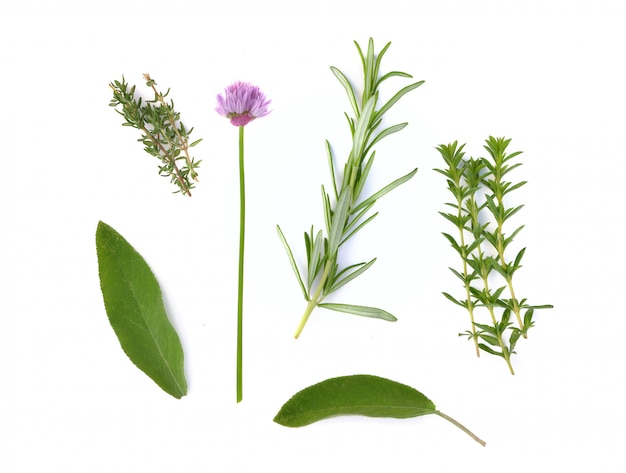 Diverse verse aromatische kruiden op witte achtergrond