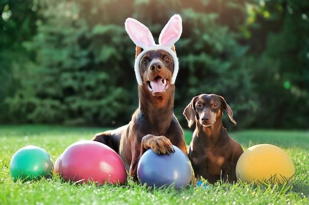 Doberman en teckel honden op het gazon met paaseieren
