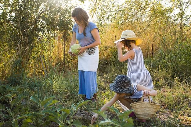 Dochter en moeder die groenten in het gebied oogsten