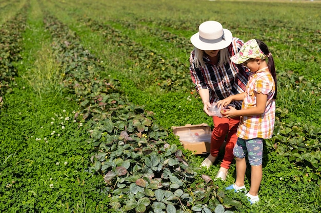 Dochter en moeder werken in de moestuin, aardbeien geoogst