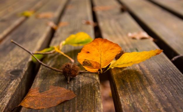 Dode bladeren op de bank.