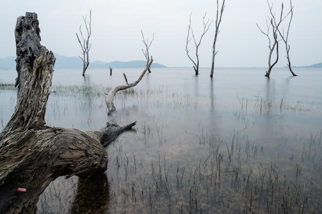 Dode bomen in het bos rond een meer met lage waterstanden. thailand