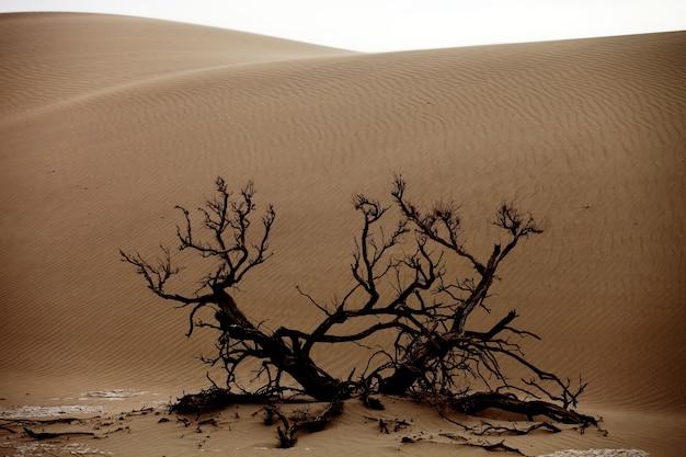 Dode boom in een woestijn in xinjiang, china