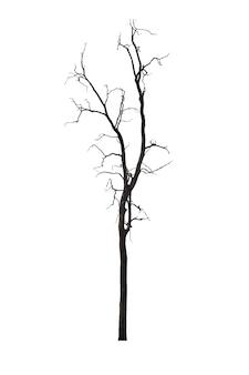 Dode boom of droge boom die op wit wordt geïsoleerd