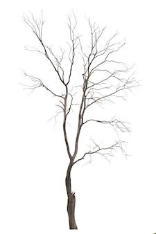 Dode boom of droge boom die op witte achtergrond wordt geïsoleerd.