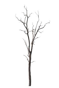Dode boom of gedroogde boom geïsoleerd op wit. uitknippad.