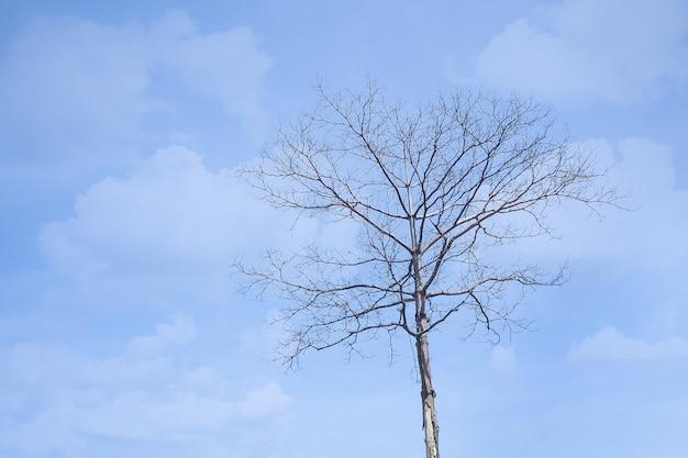 Dode boom op blauwe hemel voor montage geduld, droogte, armoede, verlies, gebroken hart, liefdesverdriet, nieuw begin