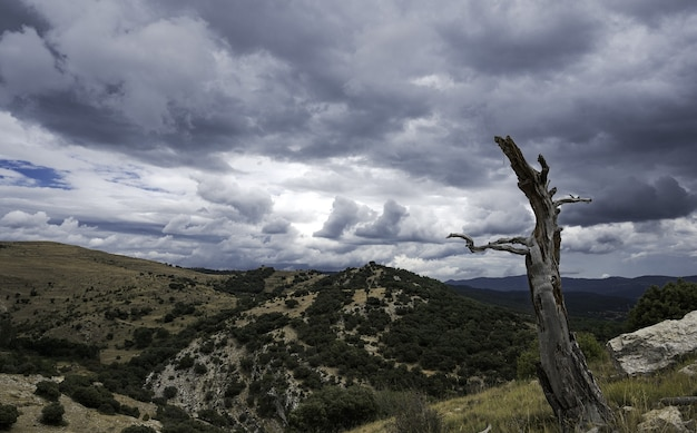 Dode boom op een berg onder een bewolkte hemel in spanje