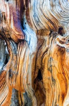 Dode boom textuur close-up.