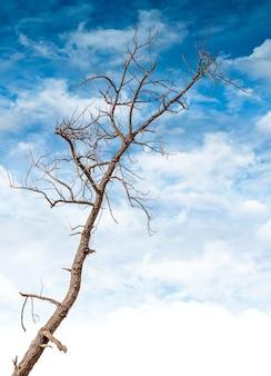Dode en droge boom op blauwe hemelachtergrond