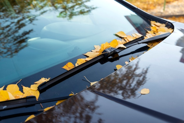 Dode gele bladeren op een autowindscherm