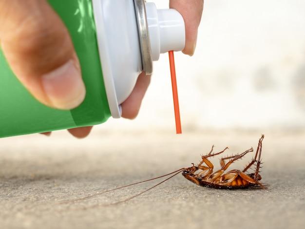 Dode kakkerlak op de vloer