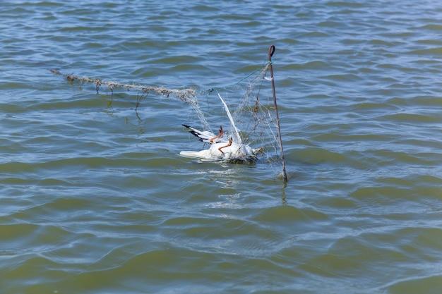 Dode meeuw raakte de visnetten, dode vogel vanwege de mensen