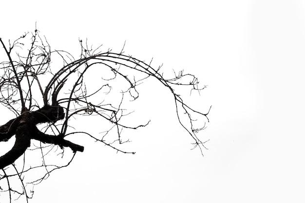 Dode takken, silhouet dode boom of droge boom op wit met uitknippad.