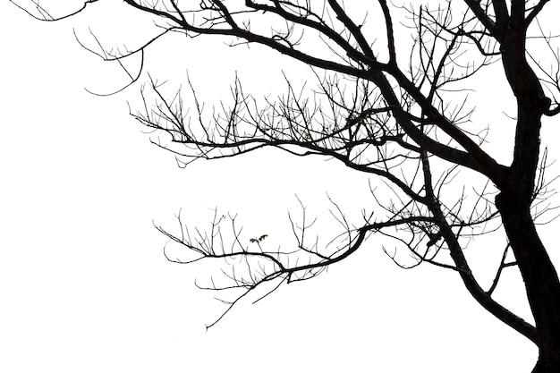 Dode takken, silhouet dode boom of droge boom op witte achtergrond met uitknippad.