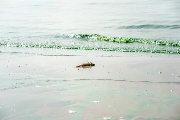 Dode vissen in vervuild water met bloeiende blauwgroene algen een groene rivier met schadelijke algen