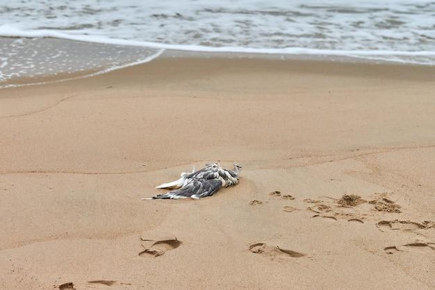 Dode zeevogel op vervuild zandstrand. uitgestrekt lijk van vogel op kust. zeevogels eten vis die plastic heeft verteerd. vergiftiging en het doden van zeedieren.