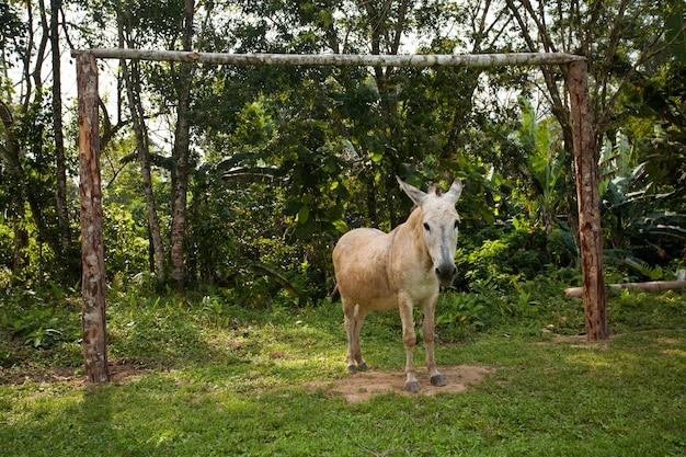 Doelman ezel voor een voetbaldoel