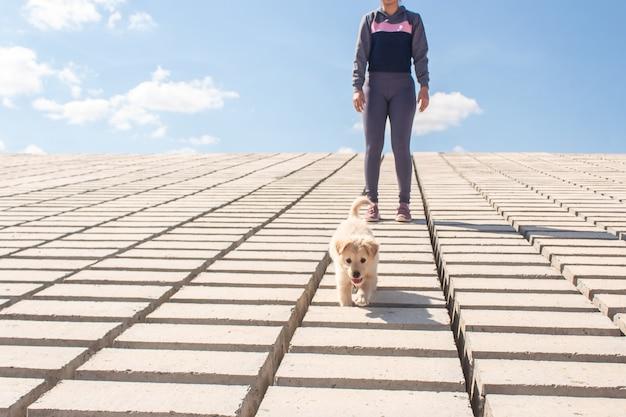 Doggy wandelen met een meisje langs de kust.