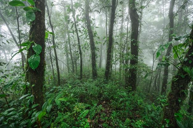 Doi phu kha regenwoud landschap. deep moist hill evergreen forest.