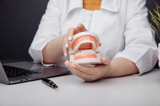 Dokter-tandarts houdt een model van de kaak in de hand