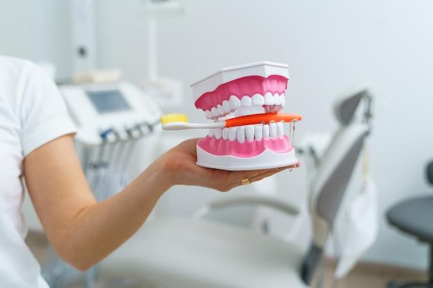 Dokter toont op een plastic kaakmonster of model verschillende methoden van tandbehandeling. moderne tandheelkundige kliniek achtergrond. roze medische handschoenen aan de handen van de dokter. tandenborstel in kaak.