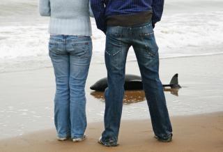 Dolfijn aangespoeld op strand