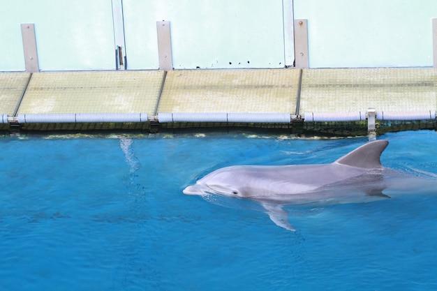 Dolfijn in aquarium