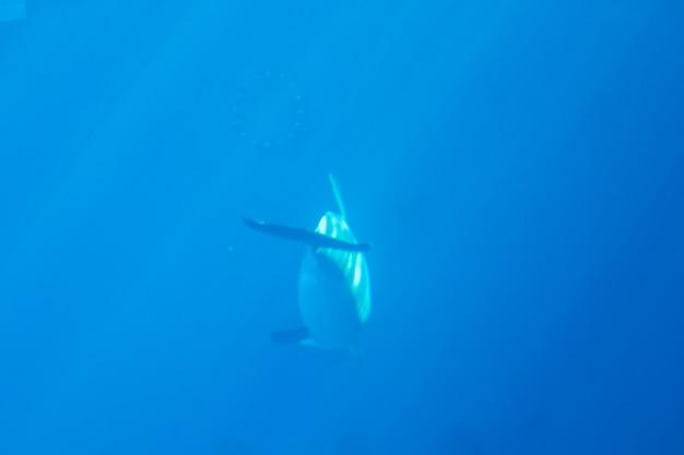 Dolfijn in de diepte
