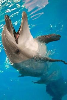 Dolfijn in het water opende zijn mond en kijkt uit het water