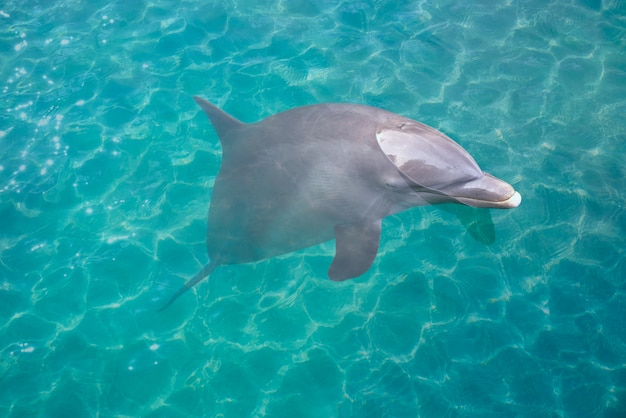 Dolfijn in turquoise waterfotomount