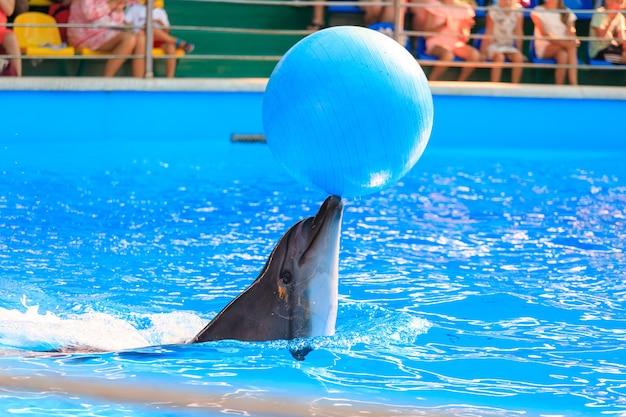 Dolfijn spelen met een bal in het zwembad. hoge kwaliteit foto