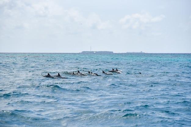 Dolfijnen springen over brekende golven op zee op de malediven