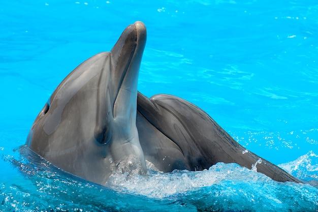 Dolfijnen zwemmen in het zwembad