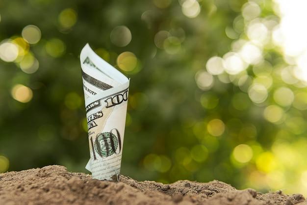 Dollarbiljet is in de grond geplant. het concept van winstgevendheid van landbouw, gewasproductie en milieuproducten