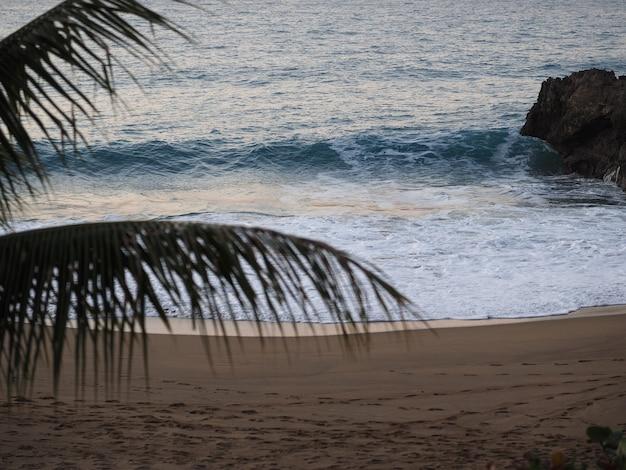 Dominicaanse republiek, strand in de schemering, golven en palmtakken. zonsondergang. selectieve aandacht. zachte focus.