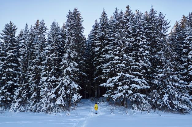 Donker bos, wandelen in het bos voor kerstmis