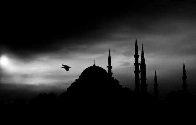 Donker landschap met vogel vliegen