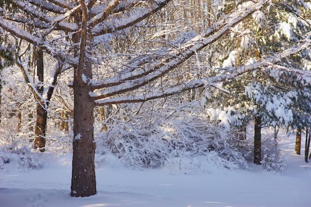Donker winterbos
