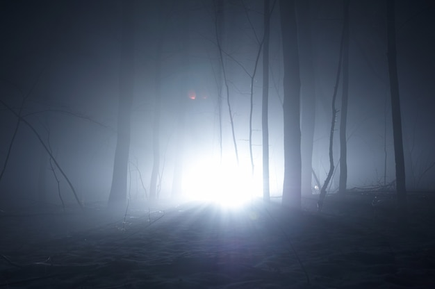 Donkerblauw griezelig bos met bomen in de mist niemand