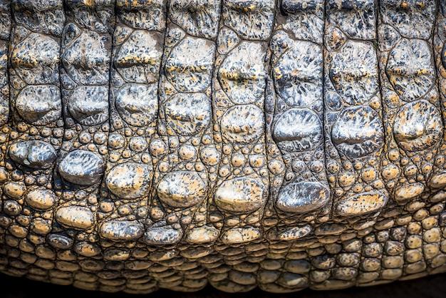 Donkerbruin krokodillenleer voor achtergrond en textuur