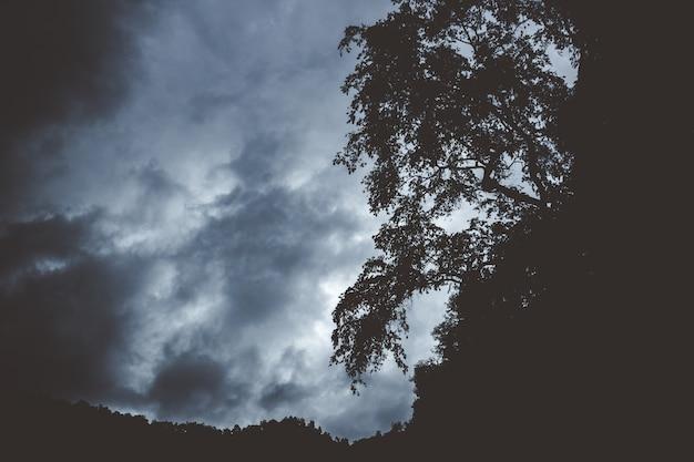 Donkere berg met silhouetten van bomen die aan de rand groeien