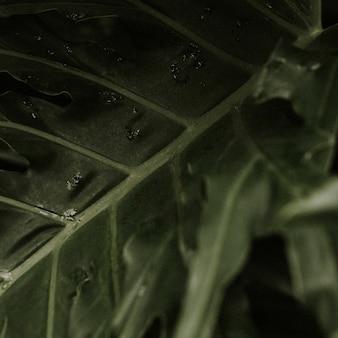 Donkere bladachtergrond jungle-esthetiek voor instagram-post