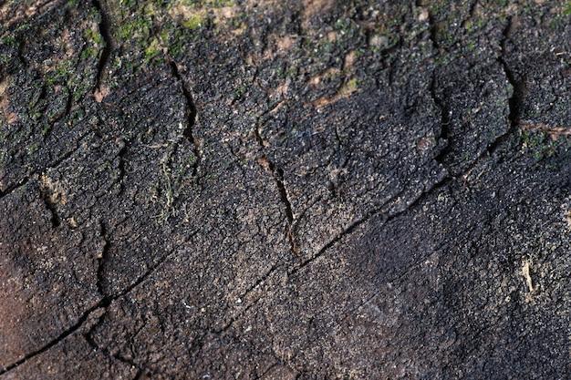 Donkere bruine houtstructuur achtergrond. close-up van een donkere, gebarsten boom met mos en vuil, bovenaanzicht, kopieer ruimte, selectieve aandacht met ondiepe scherptediepte