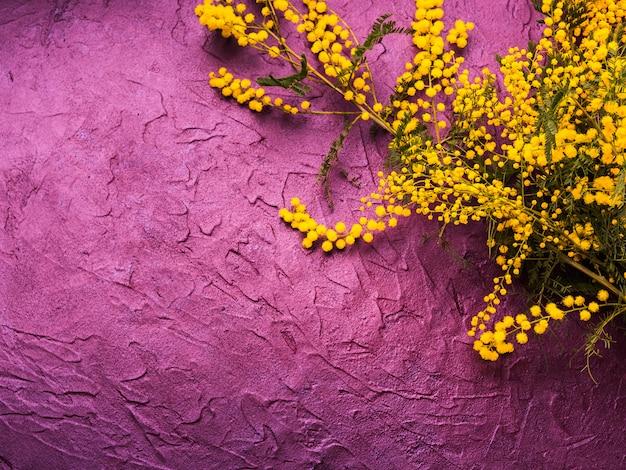 Donkere paarse gestructureerde achtergrond met mimosa