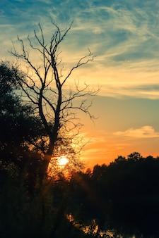 Donkere silhouetten van bomen en bewolkte hemel bij zonsondergang op de rivier.