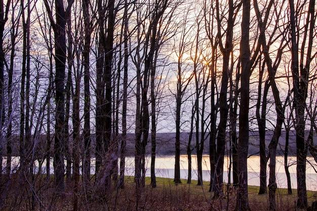 Donkere silhouetten van bomen op de achtergrond van de rivier en de lucht tijdens de zonsondergang